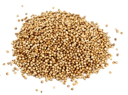 many coriander seeds isolated on white background photo