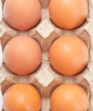 eggs in carton tray isolated on white photo