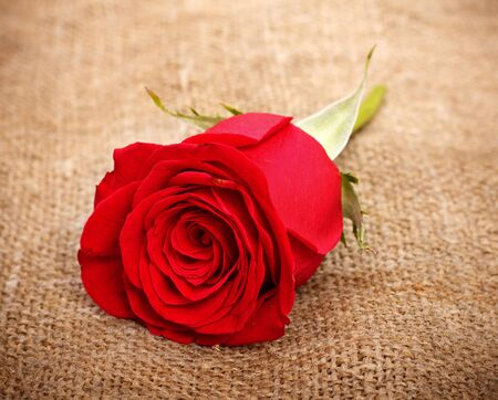 single bright red rose on old canvas Stock Photo - 9246189