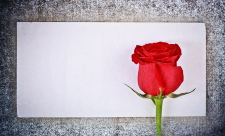 snow flowers: red rose on frozen canvas and blank envelope, template Stock Photo