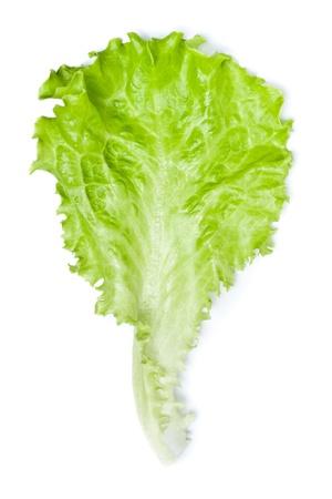 fresh green lettuce leaf isolated on white photo
