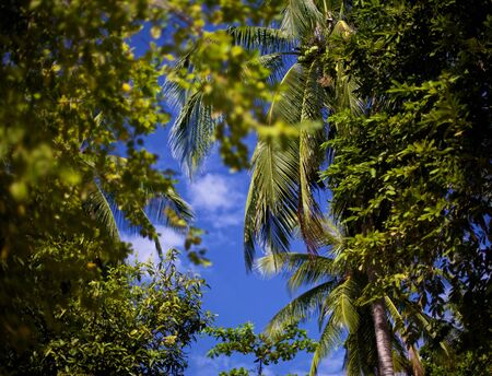 green jungle trees over blue sky background photo