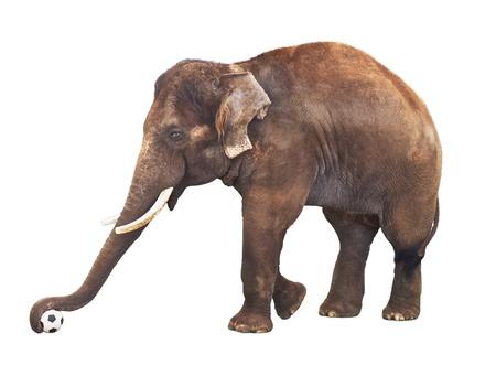Elefant mit Fußball isoliert auf weißem Hintergrund Standard-Bild - 12998026