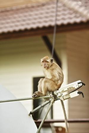 funny macaque monkey sitting on satellite antenna Stock Photo