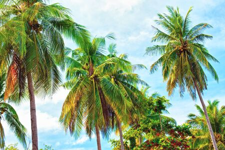 green coconut palm against blue sky background photo