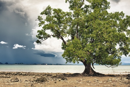 treee on sea shore and stormy clouds, Thailand photo