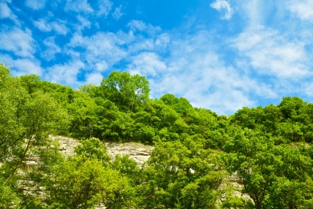 hillside with bushes at sunny summer day photo