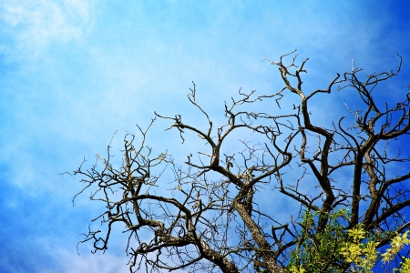 dry branches of dead tree against blue sky