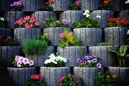tagetes: wall made of stone flowerbed with nasturtium
