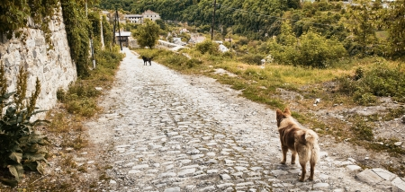 tortured: two mongrel dogs stay on old road