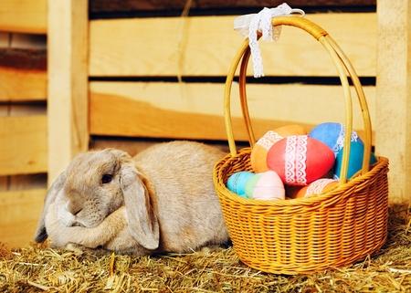 hayloft: gray lop-earred rabbit and Easter basket on hayloft