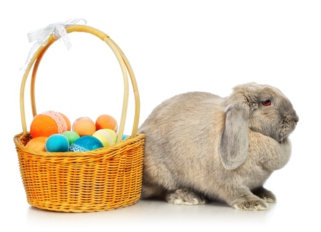 gray lop-earred rabbit and Easter basket, isolated on white photo