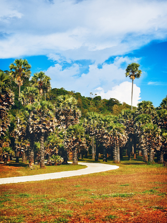 park with palms and road at summer day, Thailand photo