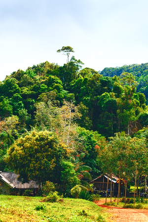 green jungle at summer day in Thailand photo