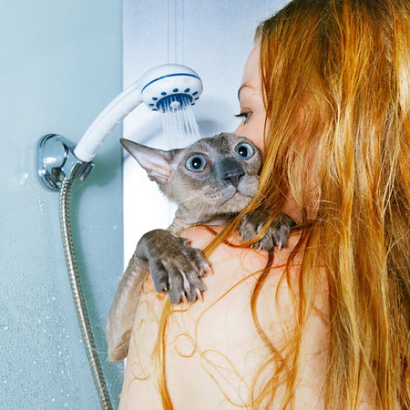 shorthair oriental cat and girl, taking a shower photo