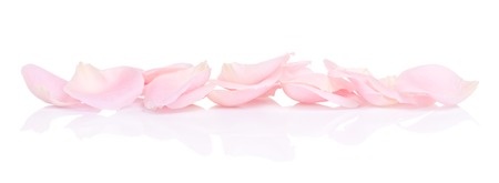pink rose petals, isolated on white background
