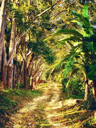 blue green landscape: dirt road in jungle Stock Photo