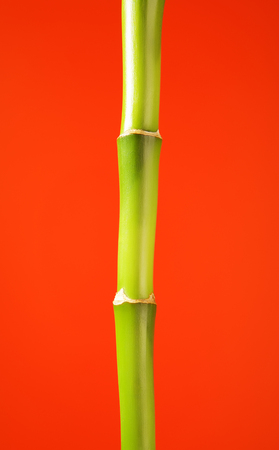bamboo stick: fresh green bamboo stick, on red background