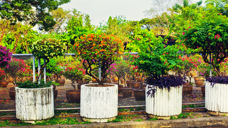 flowerbeds: stone flowerbeds with flowers in garden of thailand Stock Photo