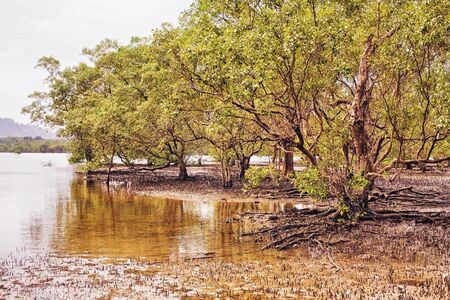 low tide: mangrove swamp at low tide in Thailand