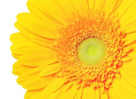 yellow gerbera isolated on: beautiful yellow gerbera flower, isolated on white Stock Photo
