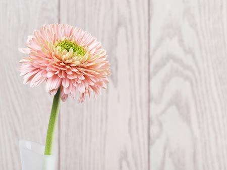 pink gerbera daisy flower in vase on wooden background Stok Fotoğraf