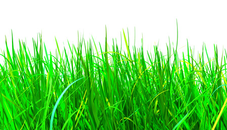 green grass isolated on white background, 3d illustration