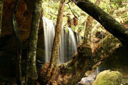 Water fall in dense rain forest vegetation (Australia) Stock Photo