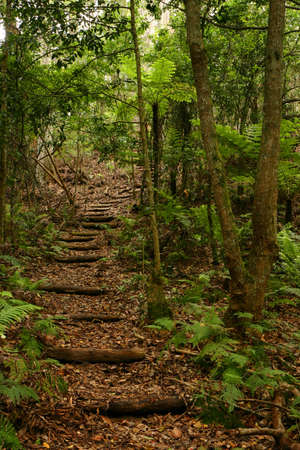 View of stairs in extricate rain forest (Australia)