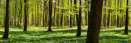 foresta: Veduta di un verde bosco a primavera  Archivio Fotografico