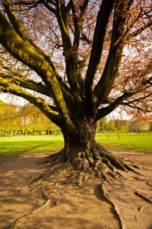 Majestic old tree in a public park Stock Photo