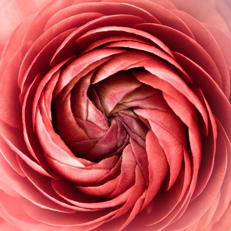 Floral spiral abstract. Pink and soft. Stock Photo