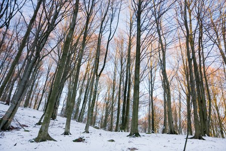 View of a forest in winter (Sweden). photo