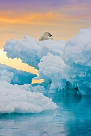 Polar bear sitting on frozen ice outcrop.  Vertically framed shot. Stock Photo