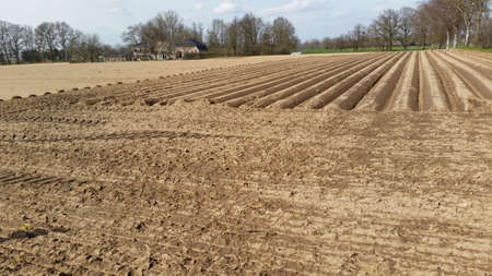 Preparation of asparagus fields now ready to seed