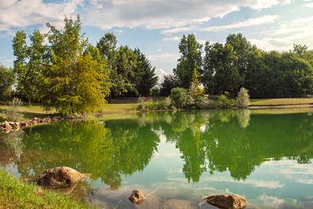 Bezinning van pijnboomboom in een meer