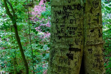 A graffiti on a tree trunk in the forest. High quality photo Stok Fotoğraf