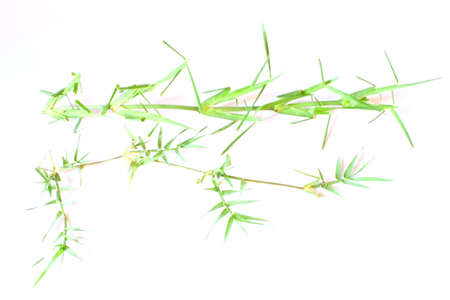 St. Augustine and Bermuda Grass Stock Photo - 14047290