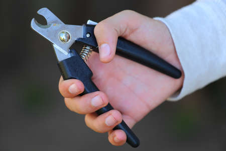 clippers: close up view of someone holding a pair of dog nail clippers