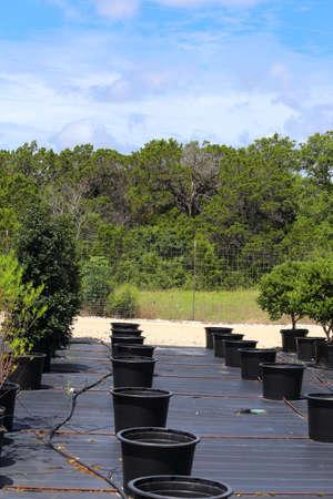 plants species: Un vivaio che ha diverse specie di piante allineate in fila.