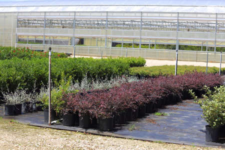 plants species: A Plant nursery that has different species of plants lined up in rows.