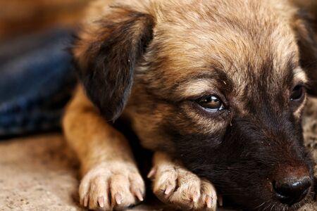 Brauner Hund sitzt in tiefen Gedanken auf der Straße