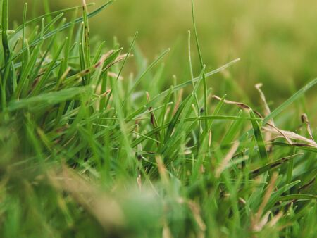 Focus photography of beautiful fresh grass during day-time.