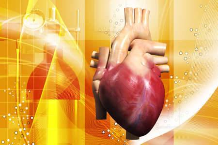 digital illustration of a human heart in white background Stock Illustration - 13939830