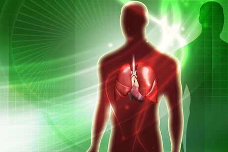 gullet: Ilustraci�n digital de pulmones humanos en el color de fondo