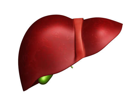 liver cirrhosis: 3d Liver and Gallbladder