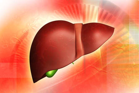 digital illustration of a human liver illustration