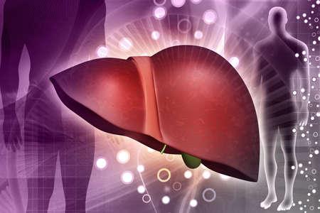 digital illustration of a human liver