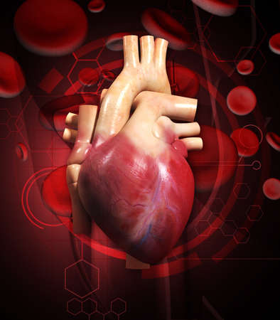 Digital illustration of  human heart  in colour background