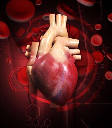 vena: Digital illustration of  human heart  in colour background